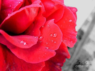 Rose After Rain Poster by Nina Ficur Feenan