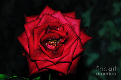 Rose By Night Light Poster by Kaye Menner