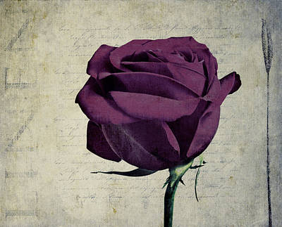 Rose En Variation - S09bt10 Poster by Variance Collections