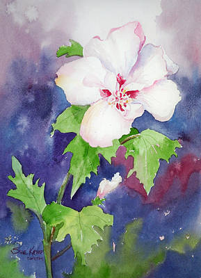 Rose Of Sharon Poster by Sue Kemp