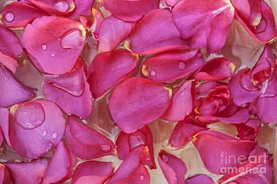Rose Petals Poster by Svetlana Sewell