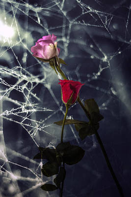 Roses With Coweb Poster by Joana Kruse