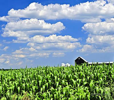 Rural Landscape Poster by Elena Elisseeva