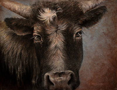 Rusty The Steer Poster by Neva Cruddas