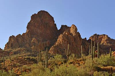 Saguaros - Symbol Of The Desert Southwest Poster by Christine Till