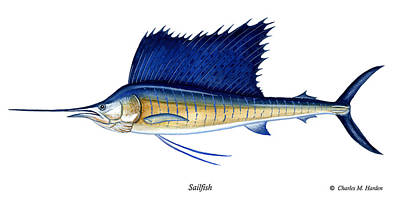 Sailfish Poster by Charles Harden