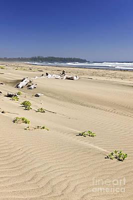 Sandy Beach On Pacific Ocean In Canada Poster by Elena Elisseeva