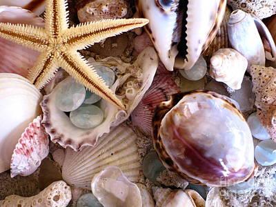 Sanibel Shells Poster by Colleen Kammerer