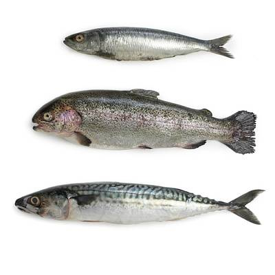 Sardine Poster by Science Photo Library