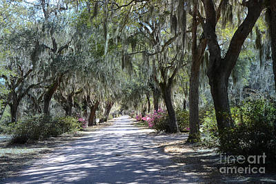 Savannah Georgia Gothic Cemetery Bonaventure Spanish Moss Trees - Hanging Spanish Moss Trees Poster by Kathy Fornal