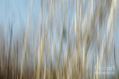 Sawgrass In Motion Poster by Benanne Stiens