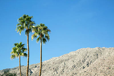 Scenic Of Palm Trees, Palm Springs Poster by Julien Mcroberts