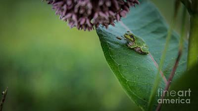 Schlitz Audubon Tree Frog Poster by Andrew Slater