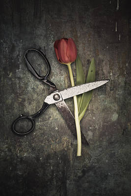 Scissors And Tulip Poster by Maria Heyens