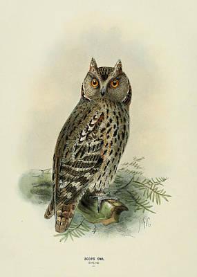 Scops Owl  Poster by J G Keulemans