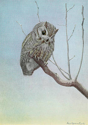 Screech Owl Poster by Louis Agassiz Fuertes