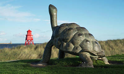 Sculpture Of A Turtle And The Herd Poster by John Short