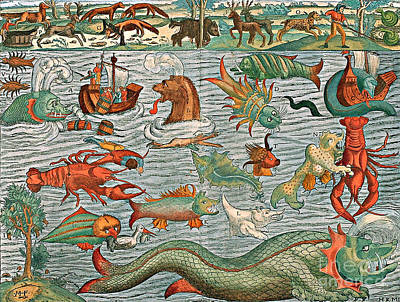 Sea Monsters 1544 Poster by Photo Researchers