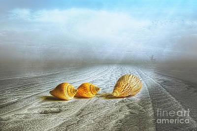 Sea Treasures Poster by Veikko Suikkanen