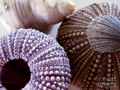 Sea Urchins  Poster by Colleen Kammerer