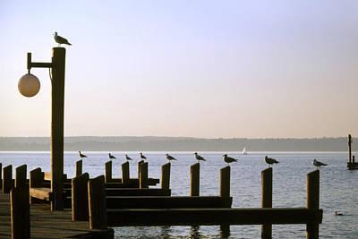 Seagull Enjoying Evening Sunlight Poster by King Wu