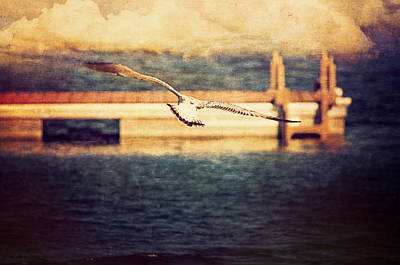 Seagull Flying Poster by Maria Angelica Maira