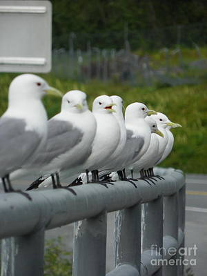 Seagulls Poster by Jennifer Kimberly