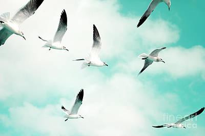 Seagulls Soaring Poster by Kim Fearheiley