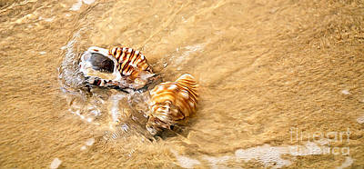 Seashells And Ripples Poster by Kaye Menner