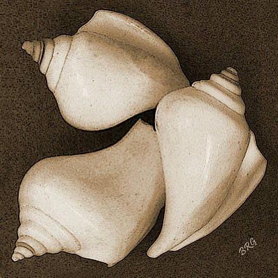 Seashells Spectacular No 4 Poster by Ben and Raisa Gertsberg