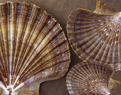 Seashells Spectacular No 7 Poster by Ben and Raisa Gertsberg