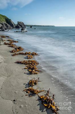 Seaweed Beach Poster by Adrian Evans
