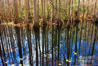 Sebring Cypress Swamp Reflection Poster by Carol Groenen