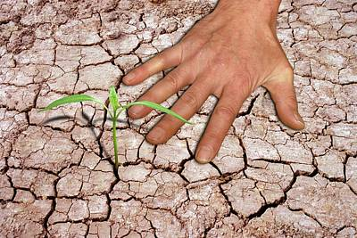 Seedling And Hand On Cracked Earth Poster by Victor De Schwanberg