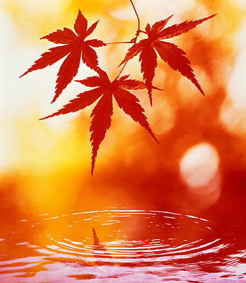 Selective Focus Of Red Leaves Poster by Panoramic Images