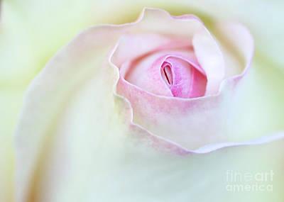 Sensual Rose Poster by Sabrina L Ryan