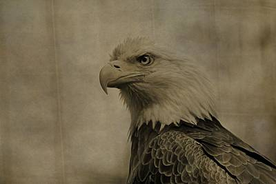 Sepia Bald Eagle Portrait Poster by Dan Sproul