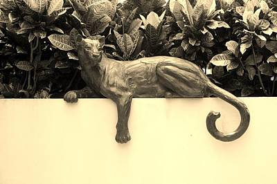 Sepia Cat Poster by Rob Hans