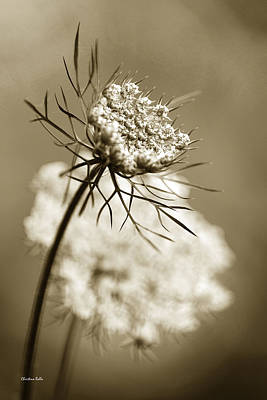 Sepia Wildflower Art Poster by Christina Rollo
