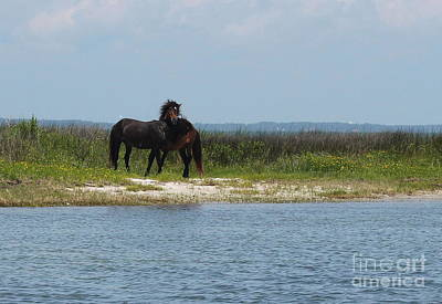 Shackleford Ponies 3 Poster by Cathy Lindsey
