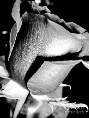 Shades Of Rose Poster by Nina Ficur Feenan