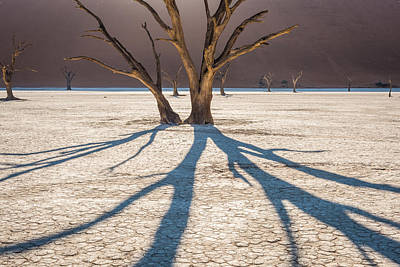 Shadow Of The Camel Thorn - Dead Vlei Photograph Poster by Duane Miller