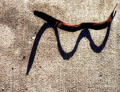 Shadow Play - Snake Poster by James Aiken