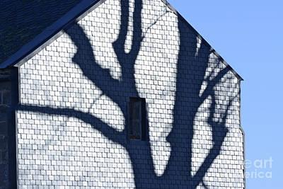 Shadow Tree Poster by Bernard Jaubert
