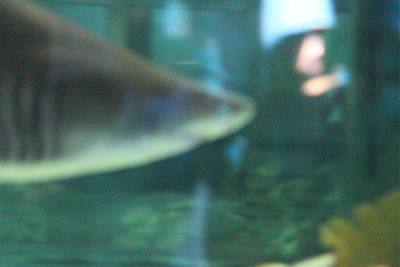 Shark - National Aquarium In Baltimore Md - 121210 Poster by DC Photographer