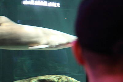 Shark - National Aquarium In Baltimore Md - 12122 Poster by DC Photographer