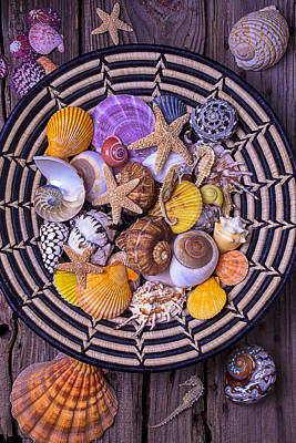 Shell Collecting Poster by Garry Gay