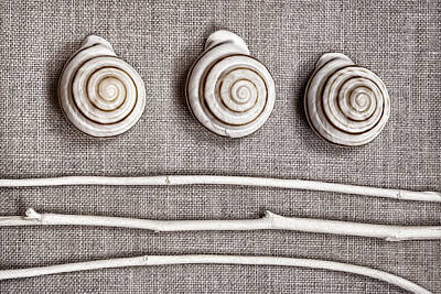 Shells And Sticks Poster by Carol Leigh