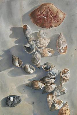 Shells On A Sandy Beach Poster by Nick Payne