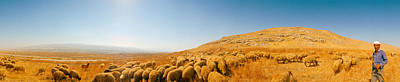 Shepherd Standing With Flock Of Sheep Poster by Panoramic Images